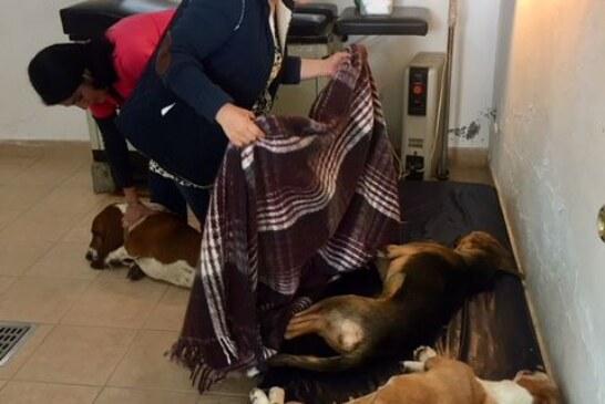 Exhorta Toluca a la población a esterilizar a sus mascotas en el CCA