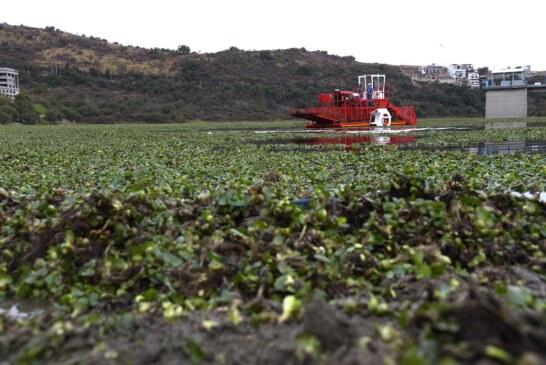 Colabora CAEM en el retiro de lirio acuático de la presa Madín