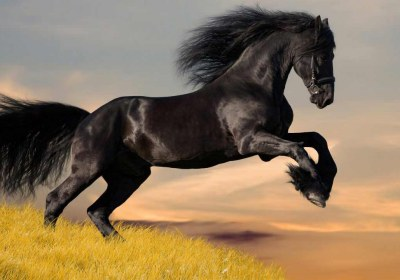 black_horse_5-wallpaper-1280×720