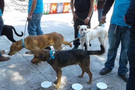 Contribuye Toluca en la tenencia responsable de mascotas