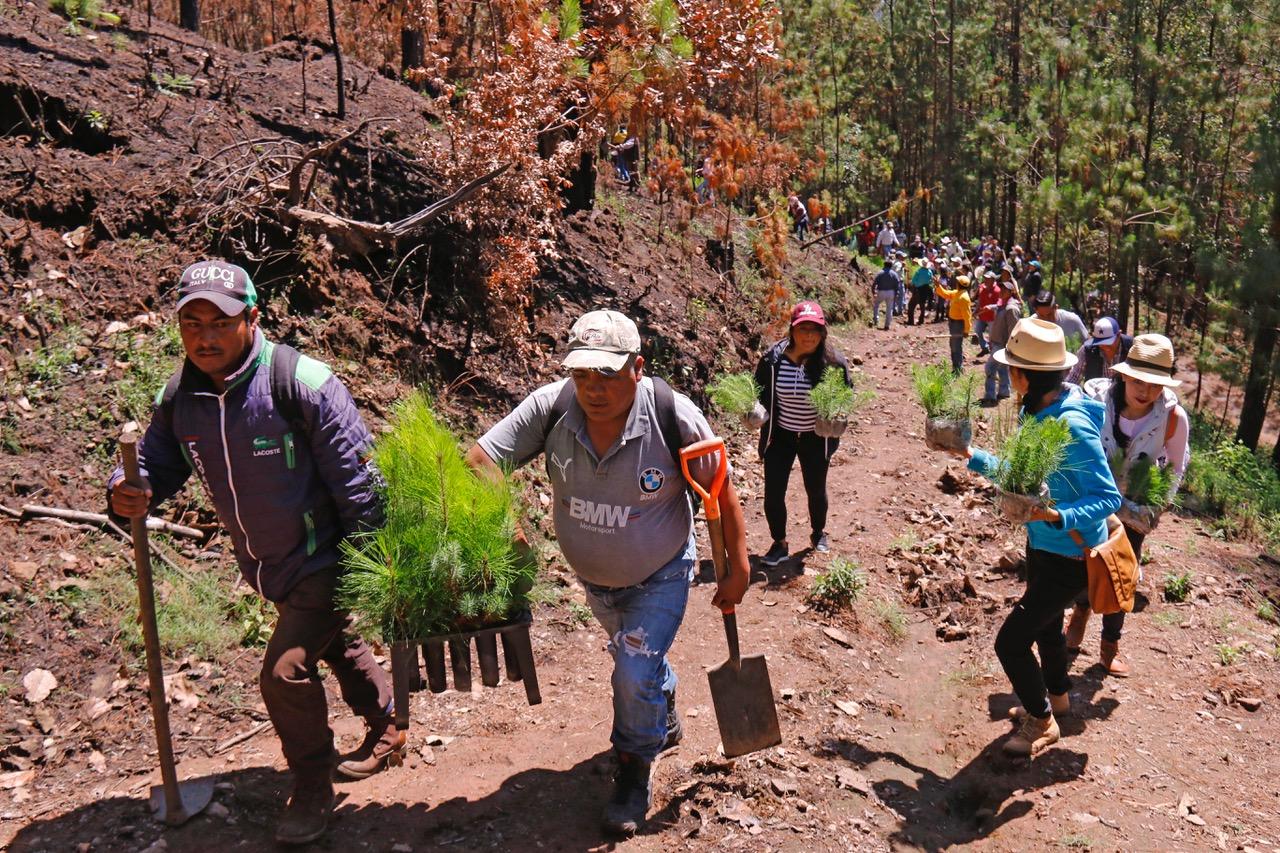 Plantan en Edoméx 190 mil árboles en jornadas de reforestación social
