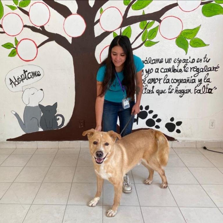 Promueve Toluca adopción de perros y gatos vía telefónica