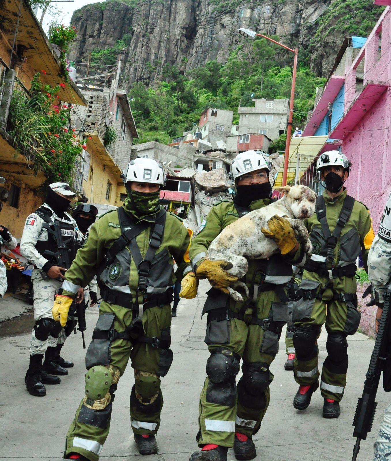 Rescatan a perrita de entre los escombros tras el derrumbe en el cerro del Chiquihuite
