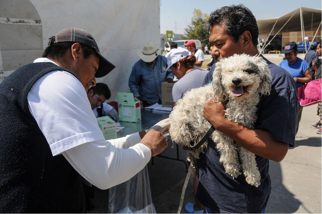 Aplicarán 2.6 millones de vacunas durante semana nacionalantirrabica canina y felina