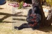 Extreman cuidados a los huéspedes del zoo Zacango.
