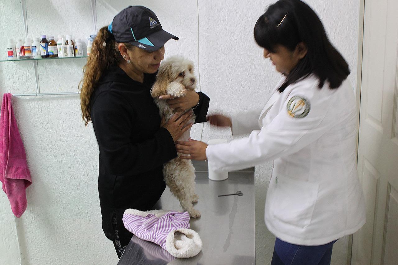 Gobierno de Metepec promueve tenencia responsable de mascotas