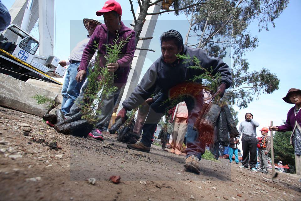 Inician los comuneros afectados por el tren siembra de arboles