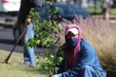 Celebra Metepec el día mundial del medio ambiente plantando árboles