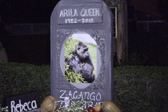 """Realiza parque ecológico """"Zacango"""" recorrido nocturno con motivo del día de muertos"""