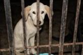 Rescata PROPAEM a 11 caninos, dos de ellos cachorros, en San Mateo Atenco
