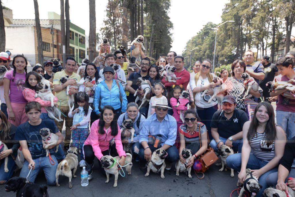 Llevan a cabo la caminata pug en Toluca