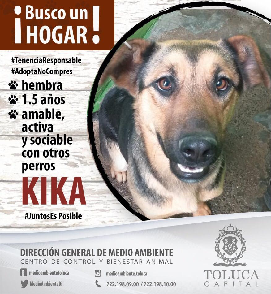 Recomienda Toluca no obsequiar animales en Navidad