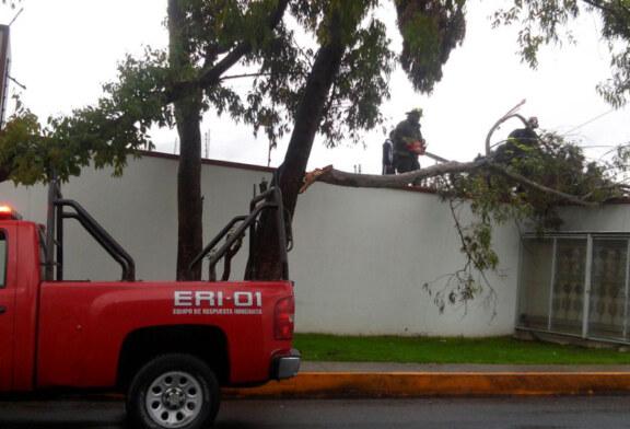 Atienden Bomberos de Toluca reportes de árboles en riesgo por paso del ciclón Franklin