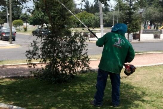 Monitoreo constante de árboles en Toluca para prevenir accidentes