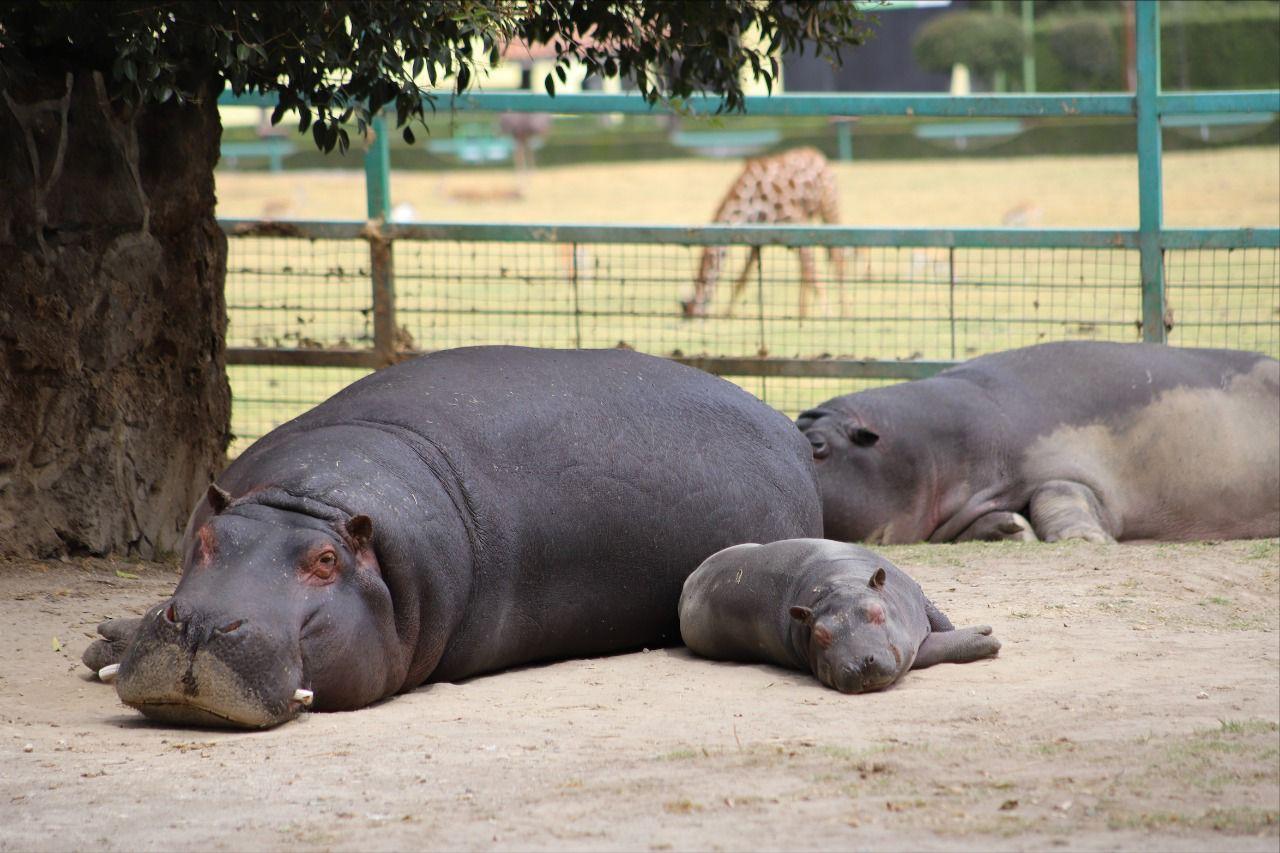 Incrementan al 70 por ciento aforo de visitantes a parques, áreas naturales protegidas y zoológicos en Edoméx