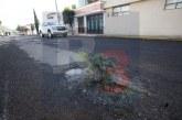 En la calle Carmen Serdán de la colonia Ciprés siembran arboles donde están sus baches
