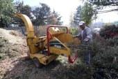 En Metepec ponen en operación centros de acopio de árboles de navidad