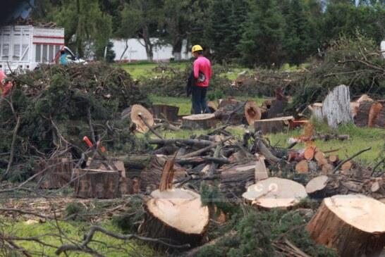 Derriban por lo menos una decena de árboles en plena ciudad capital.