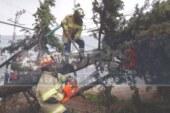 Cae un árbol en la colonia Américas en Toluca