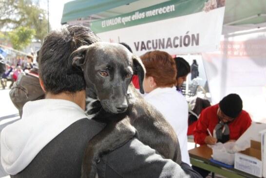 Continúa campaña permanente de esterilización y vacunación de mascotas en el CCA Toluca