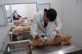 Ocupa Edoméx primer lugar nacional en esterilizaciones de perros y gatos