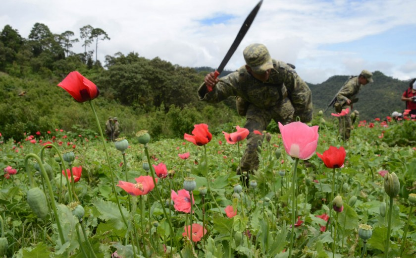 Sinaloa, estado que empezó el narcotráfico en México; Hoy un problema de Seguridad Nacional