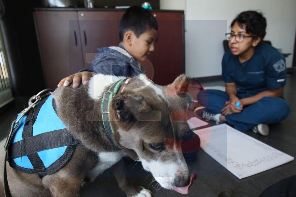 Los Pitbull una raza excelente para terapia con niños autistas
